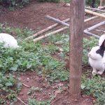 maitri-rabbits